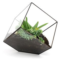 A cube (well the appearance there of) terrarium. I would love to have one of these. :D