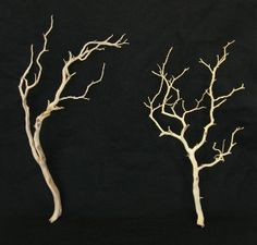 manzanita branches...our coordinator has 2 trees we can use