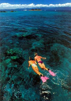Snorkel and/or scuba dive in the Great Barrier Reef.