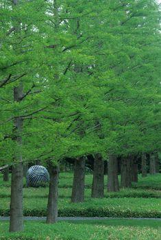 Toyota Municipal Museum of Art | PWP Landscape Architecture