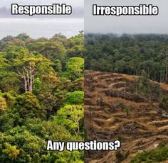 Proctor & Gamble, the maker of Head & Shoulders shampoo, is using palm oil linked to deforestation in Indonesia. Tell P & G that it's time to take responsibility and cut deforestation out of their supply chain.