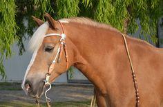Haflinger, Bridle, Horse, Horse Head, Pferdeportait
