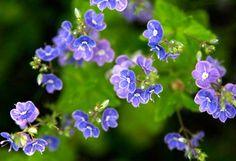 Nurmitädyke Garden Ideas, Nature, Plants, Naturaleza, Landscaping Ideas, Plant, Backyard Ideas, Nature Illustration, Off Grid
