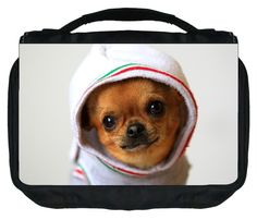 Chihuahua in a Sweater Design TM Small Travel Sized Hanging Cosmetic/Toiletry Case with 3 Compartments and Detachable Hanger-Made in the U.S.A. * More info could be found at the image url.