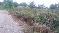 Tanah Dijual di Sentani Papua Sangat Strategis Country Roads