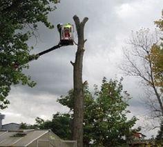 Tree Removal Ridgefield