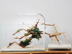 My minimal aquarium setup. : minimal_homes