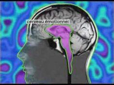 Sur le chemin de Soi- Vidéo du Dr. David Servan-Schreiber sur l'origine du stress dans notre cerveau emotionnel