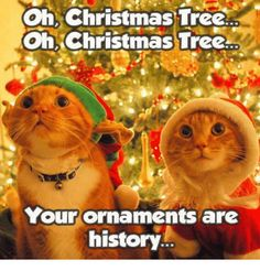 christmas-tree-oh-oh-christmas-tree-your-ornaments-are-history-8289319.png (500×522) #christmaslaughs - Tap the link now to see all of our cool cat collections #CatQuotes #CatMemes