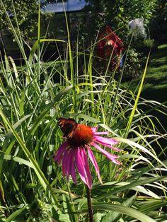 Besök i trädgården