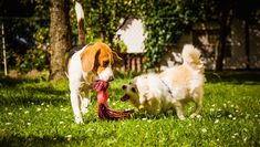 7 Dog-Friendly Dog Breeds That Get Along With Other Pups Beagle Pictures, Friendly Dog Breeds, Furry Tails, The Wooly, Great Pyrenees, King Charles Spaniel, Mixed Breed, Service Dogs, Dog Friends