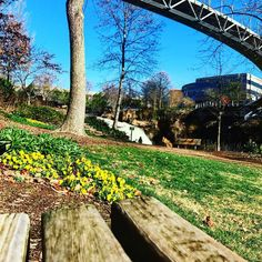 Falls Park in the wintertime. Instagram photo by Emily Drake // yeahthatgreenville