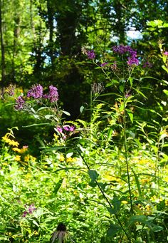 Meadow gardens are beautiful but they often require more work than you'd expect. Garden writer Dee Nash shares some ideas on what to plant and how to maintain a meadow garden. Do you have a meadow garden? What is your favorite meadow plant?