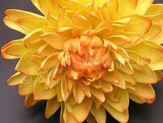 gumpaste fall flowers | Yellow sugar dahlia - closeup - a photo on Flickriver