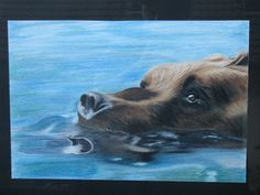 """A bear in the water. Made only with crayons """"Derwent Watercolour""""."""