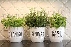 Farmhouse Decal Canisters, Small Vinyl Decals, Decal Only, Rustic Farmhouse Style Kitchen Decor, Flour Sugar Coffee Tea Salt Pasta Decal - Rae Dunn Inspired Vinyl Decals Canister Decals Herbs Vase - Herb Garden In Kitchen, Kitchen Herbs, Herb Garden Indoor, Wall Herb Gardens, Herb Planters, Herb Pots, Farmhouse Style Kitchen, Rustic Farmhouse, Country Kitchen