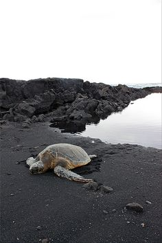 Black Sand Beach, Big Island. Sometime you'll see a honu (Hawaiian for turtle)! But please don't touch them, they're endangered :(