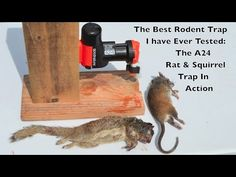 Shawn Woods declares this pneumatic rat trap to be the one of the most impressive rat-killing machines he's ever tried. Rat death is instantaneous! Best Mouse Trap, Mouse Traps, Diy Generator, Homemade Generator, Rat Trap Diy, Bird Trap, Eastern Gray Squirrel, Snare Trap, Getting Rid Of Mice