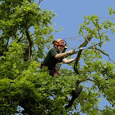 The Tree service includes many features, like removal, cutting, trimming, storm clean up and others. There are equal standard techs and tools in the company which can provide same standard in all services. The rates are reasonable by following the budgets of the owners.   http://www.lineagetreecare.com/