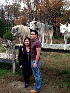 My SO and I met wolf-dogs too!