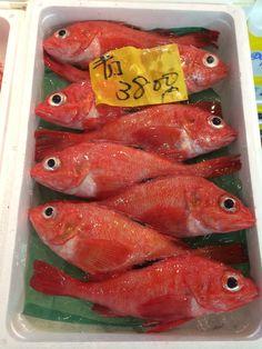 At the Tsukiji Fish Market in Tokyo.
