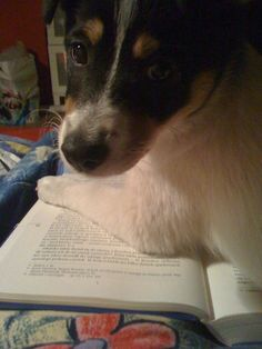 Nikita też czyta