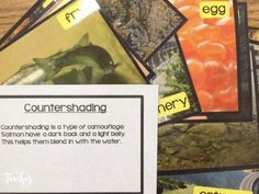 salmon picture file cards- great for vocabulary Science Resources, Science Activities, Teacher Resources, Science Fun, Teaching Ideas, Types Of Camouflage, Teacher Bags, Primary Classroom, Life Cycles