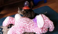 A little catnip on P'Nuts new Bunny and Goober is alllll over it