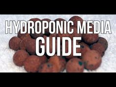 Hydroponic Media Guide: What Should You Use? - YouTube