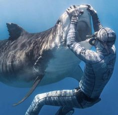 🔥 Diver coming face to face with a tiger shark 🔥 Shark Pictures, Funny Pictures, Shark Photos, Save The Sharks, Shark Bait, Underwater Life, Great White Shark, Ocean Creatures, Mundo Animal