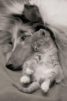 we can all get along...with a little bit of love...