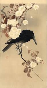 Image result for crow and cherry blossom