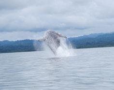 Whale Watching at Nicuesa!