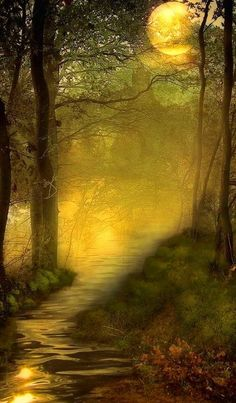A new day in the forest. I wonder what fun it will bring... pinned with Bazaart