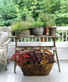 Eye-catching as well as edible, herbs massed together on a table transform a small patch of porch into hardworking acreage. Burgundy coleus in a timeworn metal tub beneath provides a colorful counterpoint.