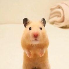 Hamster . . .