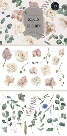 Roses and Orchids watercolor set by BolshoyMaArt | GraphicRiver Background Images Wallpapers, Buy Roses, Paint Set, Orchids, Wedding Invitations, Clip Art, Hand Painted, Watercolor, Flowers