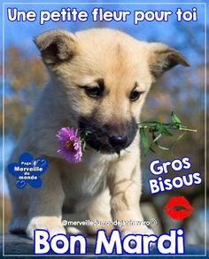 Bon Mardi, Friday Morning, Messages, Tuesday, Dogs, Animals, Good Night Funny, Animales, Animaux