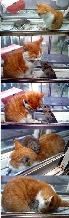Tom & Jerry in real life