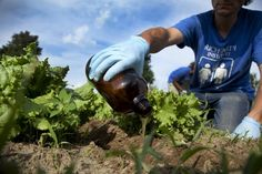 From toilet to table: Peecycling research at U of M investigates urine as fertilizer