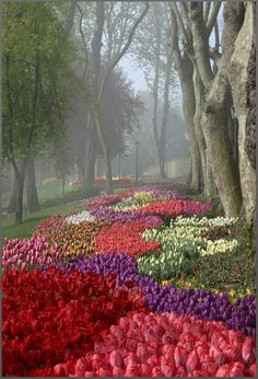 Tulip Festival at foggy Emirgan Park in Istanbul, Marmara_ Turkey