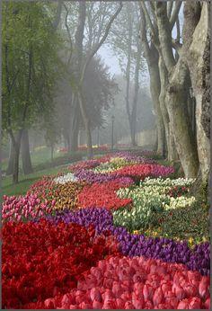 Tulip Festival at foggy Emirgan Park in Istanbul, Marmara_ Turkey