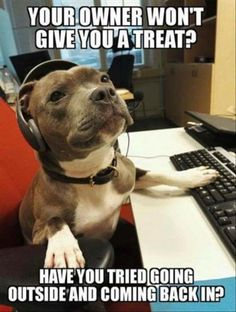 omg!!! lol!! totally my dogs mentality!!! lmao!!