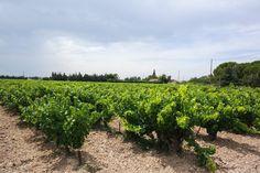 vineyards / northern rhône / #provence #wine / helena gaultier