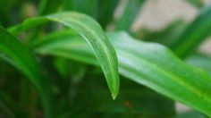 Sebuah warna hijau yang sedikit  kabur