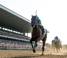 147th Belmont Stakes American Pharoah and jockey Victor Espinoza romp past the cheering crowd on their way to the wire...