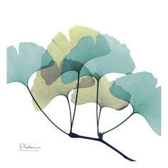 Great Big Canvas 'Serenity Gingko X-Ray by Albert Koetsier Photographic Print Size: H x W x D, Format: Black Framed Wall Art Prints, Fine Art Prints, Illustration, Art Graphique, Watercolor Art, Find Art, Serenity, Framed Art, Artwork