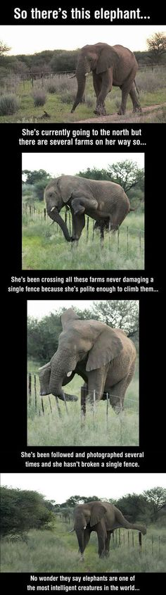 And this is one of the reasons I love elephants! They are just so caring.