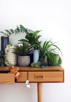 Los rincones con plantas de interior más bellos de Pinterest