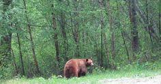 Wildlife Sighting Purpose